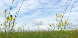 Image of wetlands with wild flowers and blue sky above
